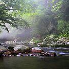 Tennessee Stream ~  by Scarlett