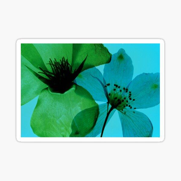 Green & Blue Sticker