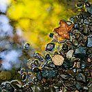 stoned reflection by Allan  Erickson