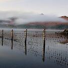 Mist on Derwent Water by Jon Tait