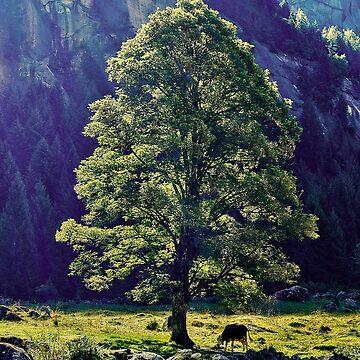 Cow under the tree by birba