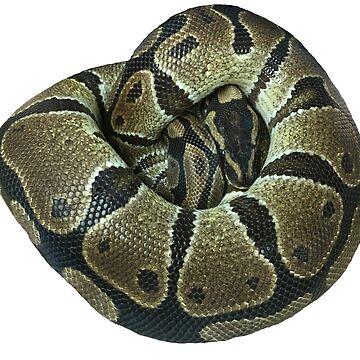 Ball Python by lrspann1