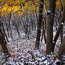 Beautiful Colorado by Josh Dayton