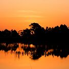 Golden morning by kathy s gillentine