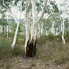 Megalong Magic #1 - The HDR Experience by Philip Johnson