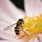 Hoverfly by Tracy Friesen