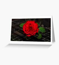 A rose for Sharona Greeting Card