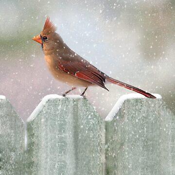 Female Cardinal Snowy Day by bhymer