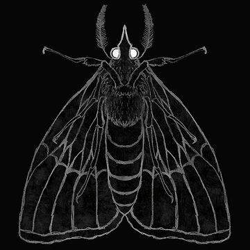 Moth by ShayneoftheDead