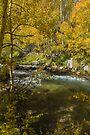 Ahh The Colors of Fall by photosbyflood