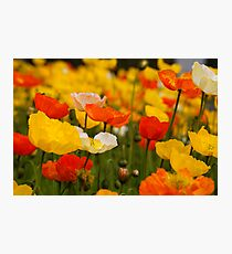 Popping right out in a field of dreams. Photographic Print