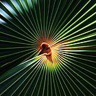 Palm art by kathy s gillentine