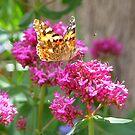 Butterfly Paulie 2 by fourthangel