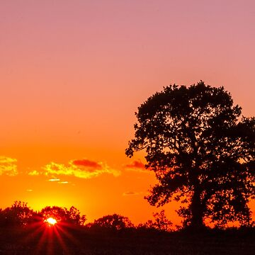 Lone tree in the fire by racoon