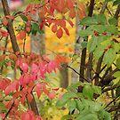 Autumn Leaves by Vonnie Murfin