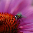 Bug Eyes by rabeeker