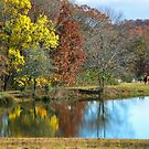 The Country Life by RickDavis