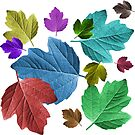 wundervolle, bunte Blätter, Herbst, Baum, Laub, Jahreszeit von rhnaturestyles