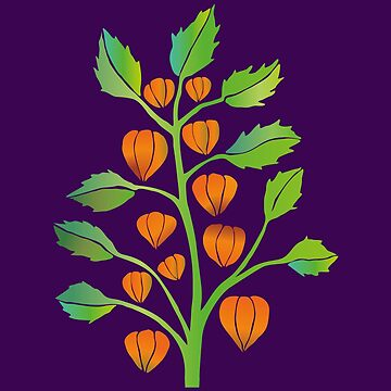 Physalis vector by Bwiselizzy