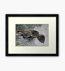 WTF TURTLES Framed Print