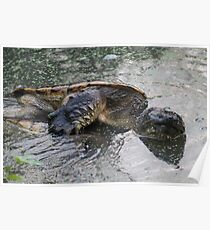 WTF TURTLES Poster