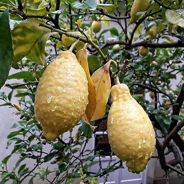 Lemons by Rori