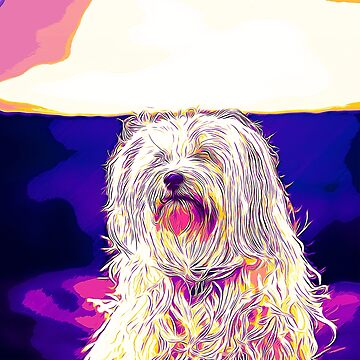 gxp hairy havanese dog vector art purple blue by gxp-design