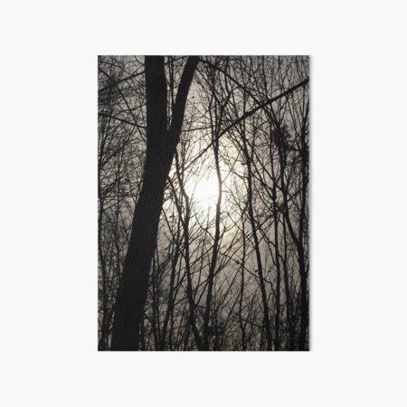 Trees in Shadow Art Board Print