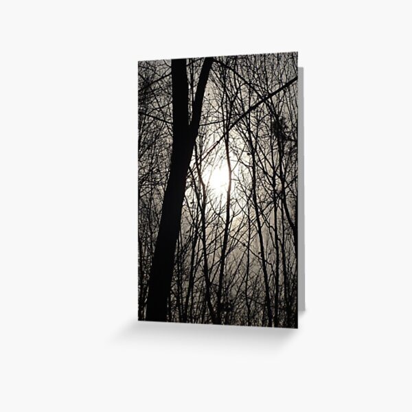 Trees in Shadow Greeting Card