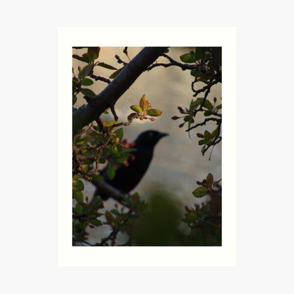 Black Bird and Rose Branches Art Print