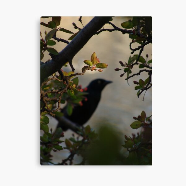 Black Bird and Rose Branches Canvas Print
