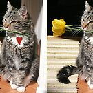 Kitty with a rose by Istvan Hernadi