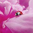 Peony & Ladybug by Laurie Minor