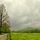 Storm Brewing in Springtime by Lisa G. Putman