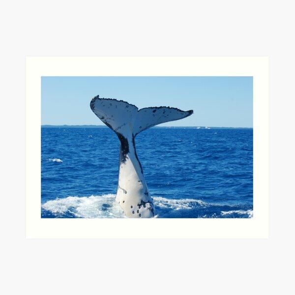 Mighty humpback downward Art Print