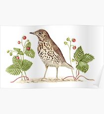 Song Thrush and Wild Strawberries Poster