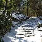 Winter Stairs by Tibby Steedly