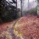 Quiet Path by Tibby Steedly