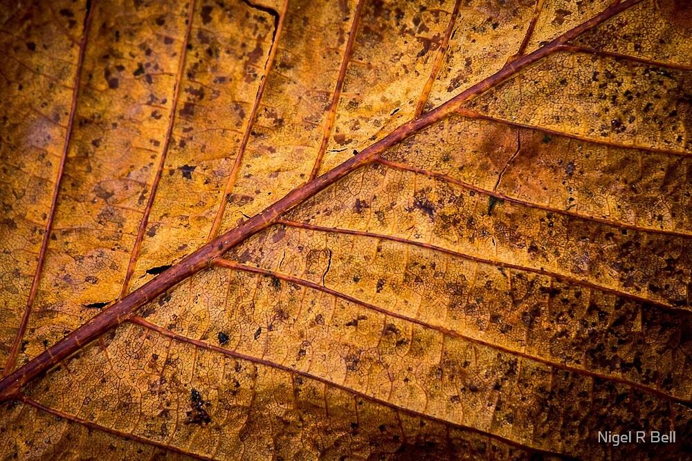 Gold Leaf by Nigel R Bell
