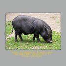 Japanese Zodiac 2019 - Cute pig by frommyhorizon