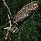 Burrowing Owl by Ladymoose
