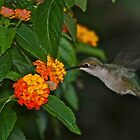 low light hummingbird by autumnwind