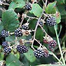 Blackberries - Summer's Blood by WesternExposure