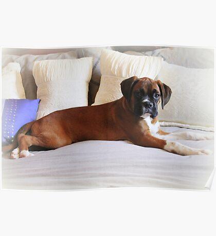 Nicht mein Bett ... sagst du? - Boxer Dogs Series Poster