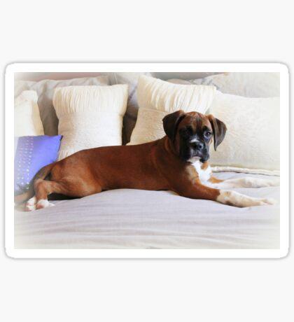 Nicht mein Bett ... sagst du? - Boxer Dogs Series Sticker