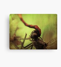dragonfly world Canvas Print