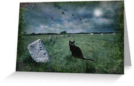 Cornish Black Cat by Angie Latham