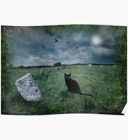 Cornish Black Cat Poster