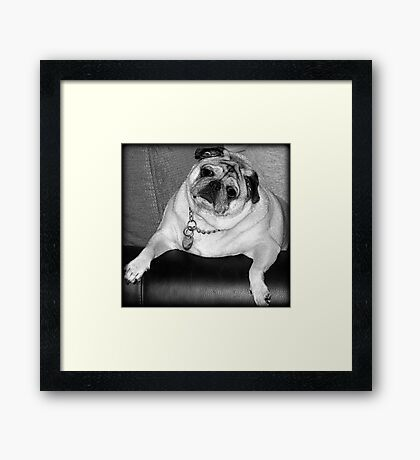 "Did you say ""treat""? Framed Print"