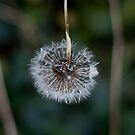 Circle of Wishes..blow by Gemma Burleigh